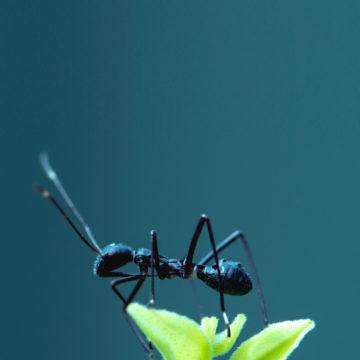Ants Nature